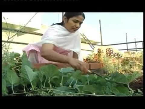 organic  kitchen  garden సేంద్రీయ పద్ధతిలో ఇంటిపంట / Centre for Sustainable Agriculture