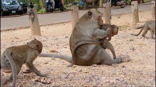 Why big male monkey do bad on baby monkey