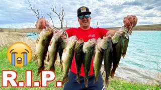 Removing HARMFUL Unwanted Bass from a Pond!! [Catch Clean Cook]
