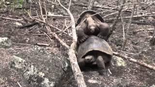 2014-05-01 Galapagos