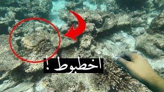 دخلت  في بحر المالديف ولقيت اخطبووط نايم !!