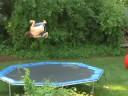 1260 on trampoline