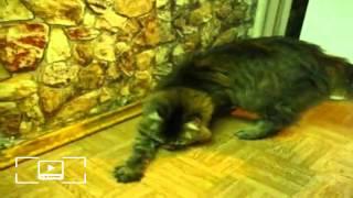 Кот закапывает