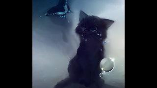 Коты Воители:Это не любовь...