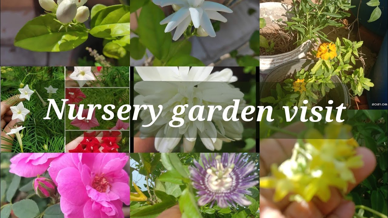Eshan Farm Nursery Ambattur Plants For Sale From Rs 20 Nursery Garden Vlog By Acetrendz Youtube
