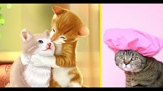 Funny and cute cat videos compilation #14 | Cat Vines