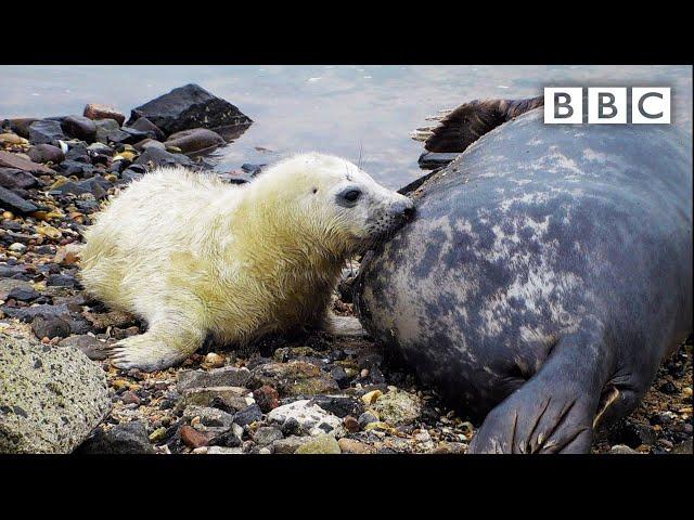 Best of British Wildlife 🦔 31.10.2020 🐿 BBC