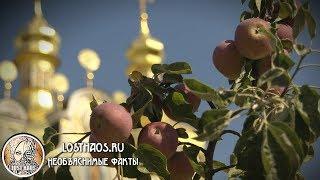 Яблочный спас 2017: Как и когда празднуют История, приметы и традиции торжества