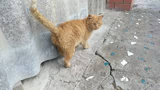 Кот, тебе нормально? Кот разговаривает (говорит) со мной