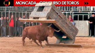 CONCURSO DE TOROS ◾ MONCADA ◾  (Benavent / Alba Atenea / F.Machancoses/ G.Vidal / Parejo / H. Cali)