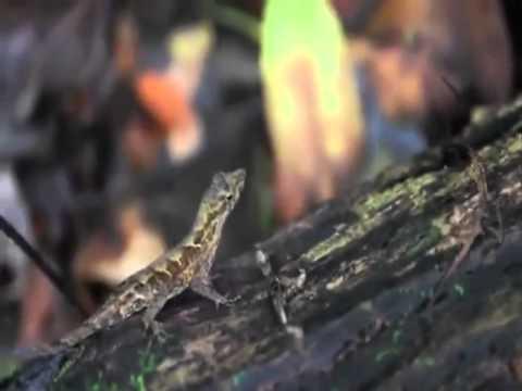Discover the secrets of the rainforest- La Ceiba, Honduras