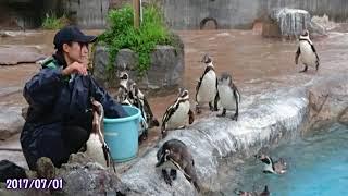 グレープ君がフルルの傍にいたか動画で見てみよう【東武動物公園】中編