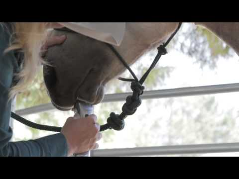 Wahl grooming a horse with the Figura Lithium Ion with Diane Holmes