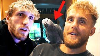 Stealing Logan Pauls New Bird!