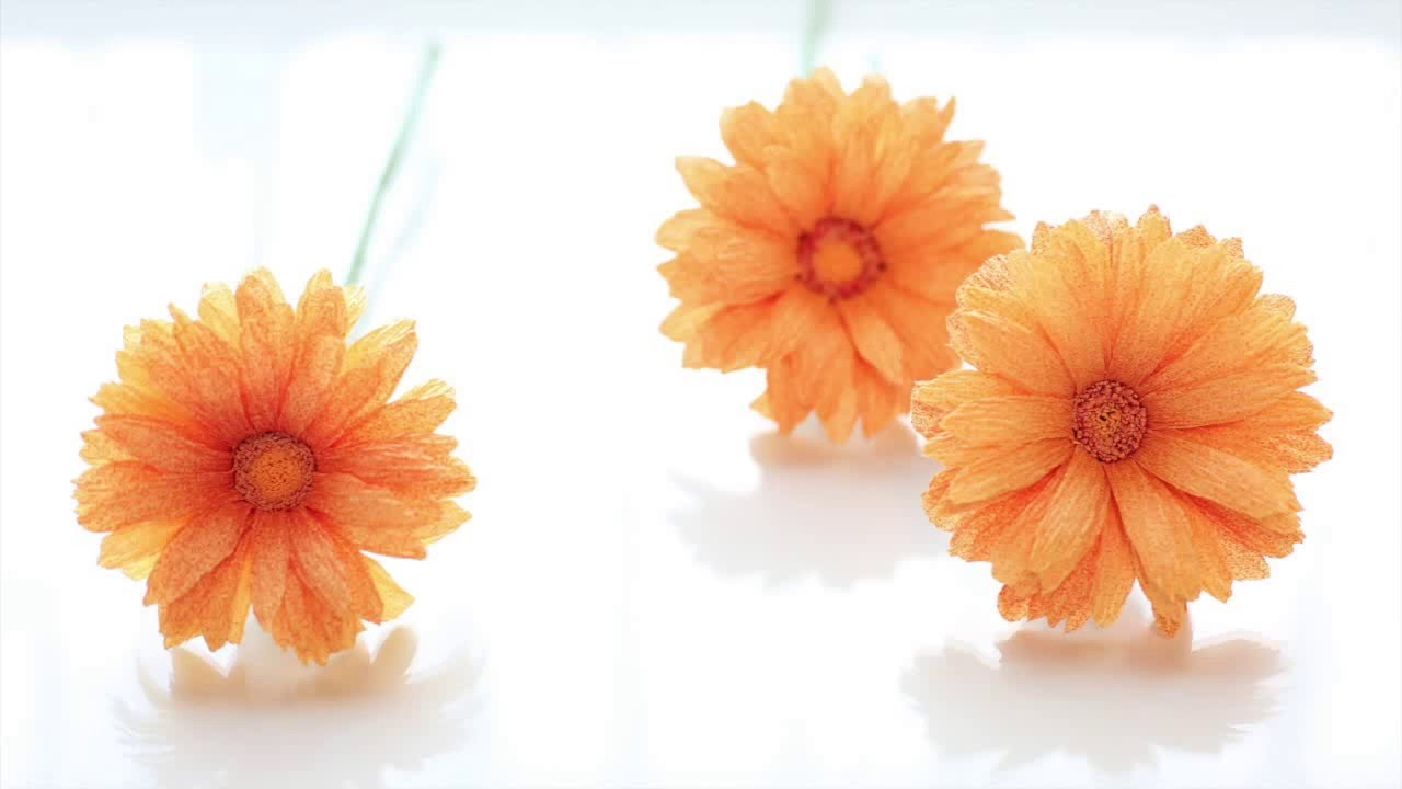 crepe paper flowers  gerbera daisy  easy  u0026 simple full