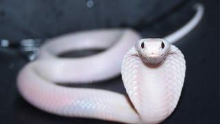 Самая милая змея в мире!