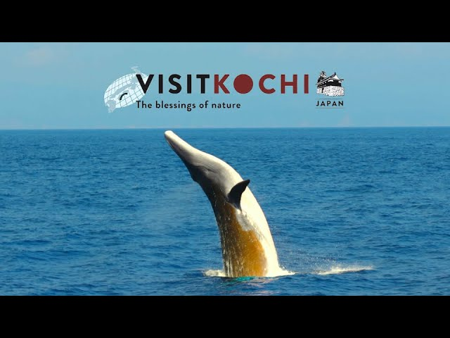 Human × Nature - VISIT KOCHI JAPAN