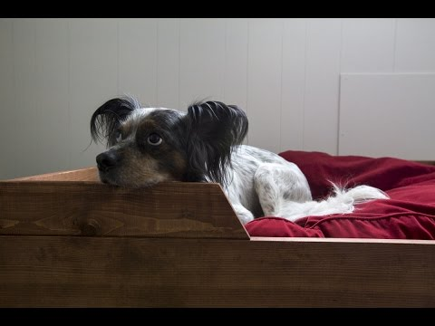 how-to-make-a-diy-dog-bed