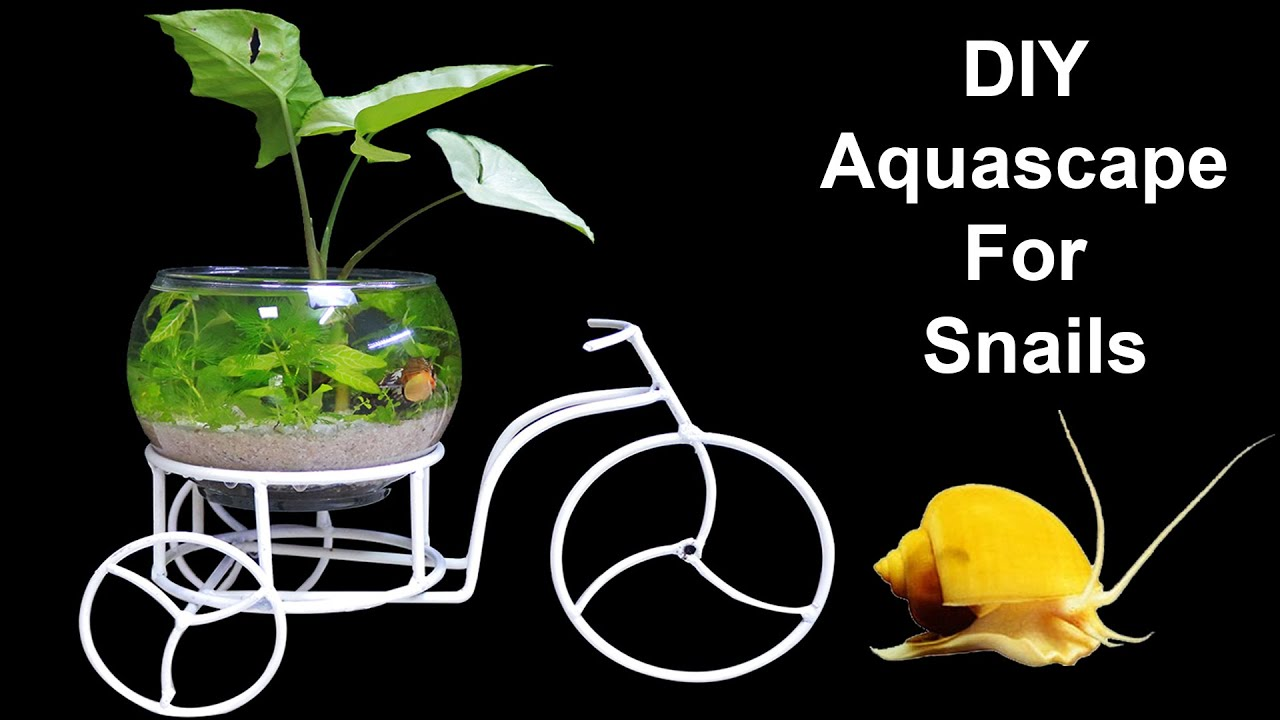 How To Make Mini Aquascape for Snails - Do Not Keep Betta Fish in Small Fish Tank - Mr Decor
