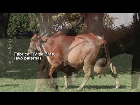 LOTE 118 – FRANCIS FIV CABO VERDE – JCVL 3508
