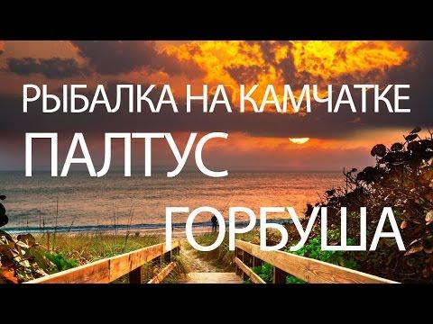 РЫБАЛКА на ПАЛТУСА и ГОРБУШУ - КАМЧАТКА