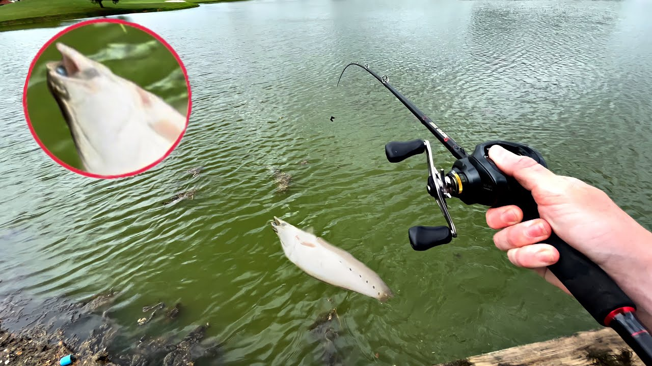 I Caught the RAREST Fish in the Whole Lake!! *UNEXPECTED*