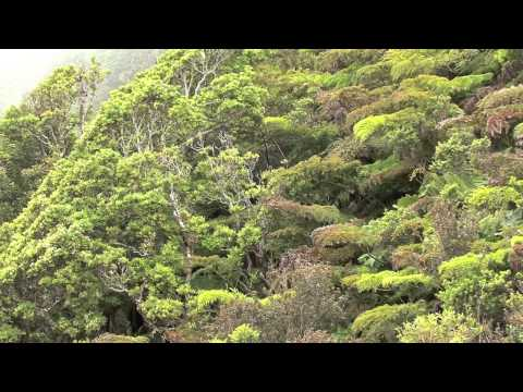 isla (island- archipel) juan fernandez - flora-flore- partie 04