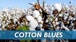 New Cotton Virus Being Researched