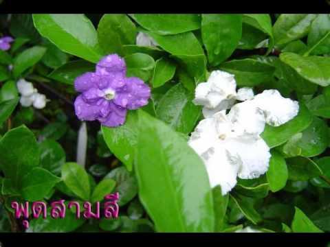 ชมดอกไม้ไทย 2