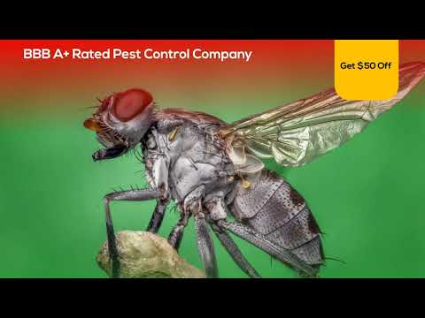 Video Ad Template For Pest Control Company