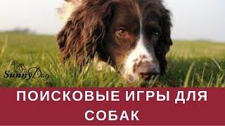 Интеллектуальные игры. Поисковые игры для собак