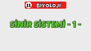 11.Sınıf Biyoloji | İnsan Fizyolojisi - Sinir Sistemi -1-