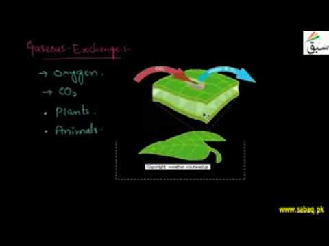 Cellular Respiration, Gasoues Exchange and Breathing |Biology Chap 10 | 10th Class | Punjab Board HD
