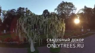 Свадебная арка для свадьбы в