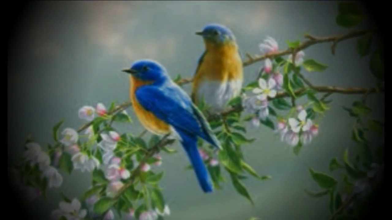 beautiful pictures of flowers and butterflies birds - YouTube for Beautiful Pictures Of Birds And Flowers  545xkb