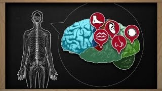 Excesiva sudoración esclerosis múltiple