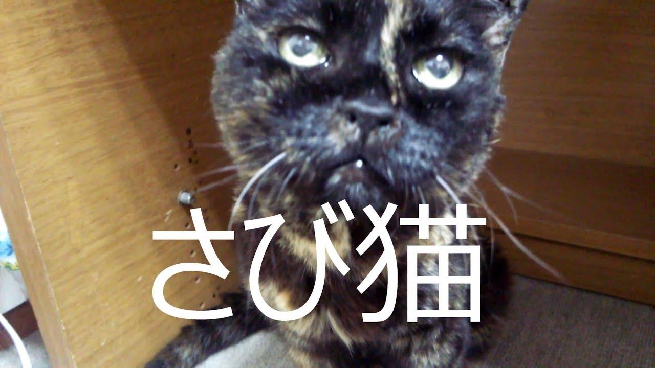 サビ猫性格