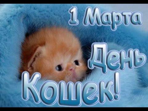 С Днем Кошек  ! 1 марта - День Кошек ! Шуточное поздравление.