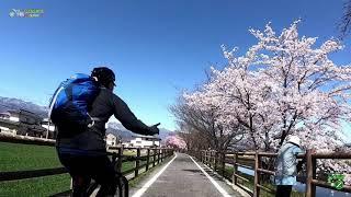 あづみ野やまびこ自転車道桜お花見ライド20190420 thumbnail