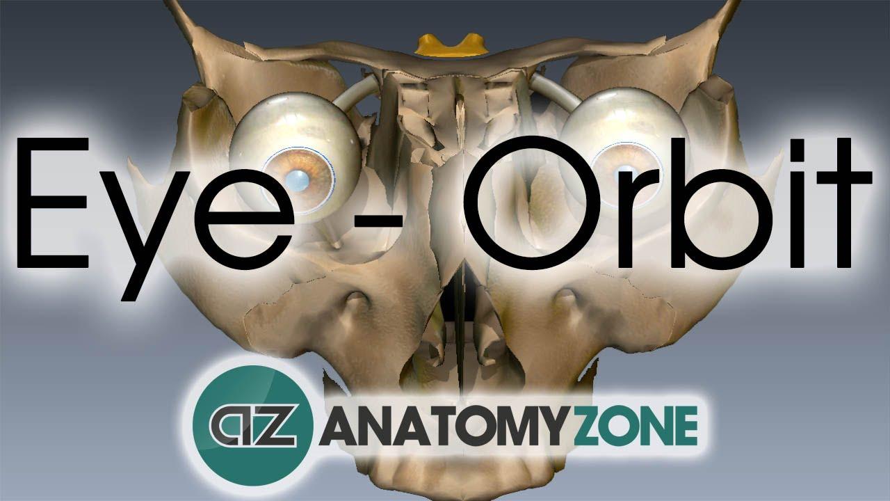 Orbit | Eye Anatomy - YouTube