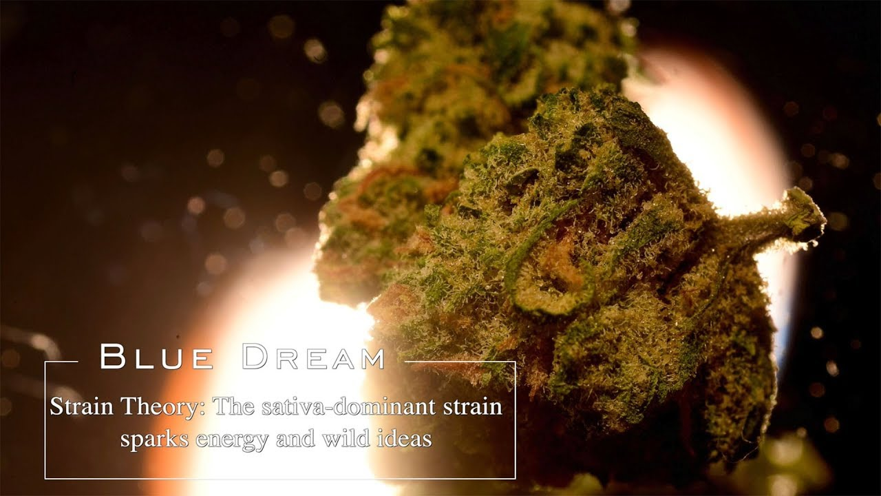 Blue Dream | Strain Theory