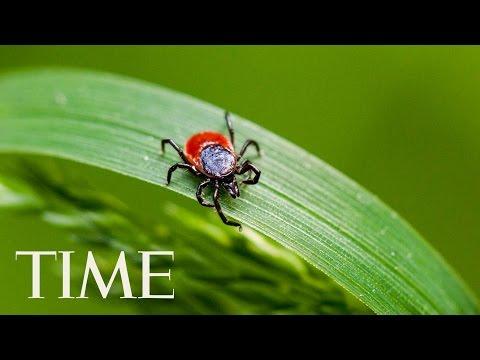 Powassan Virus Is the Scary New Reason to Avoid Ticks   TIME