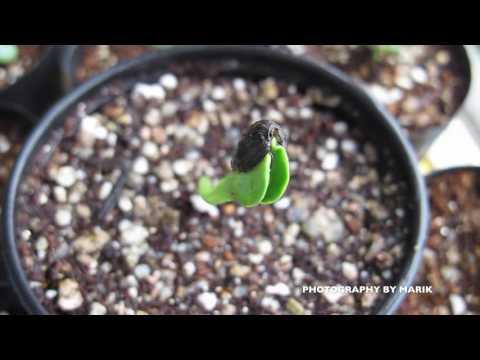 식물키우기 / 해바라기 Day 06 - 새싹 자라는 모
