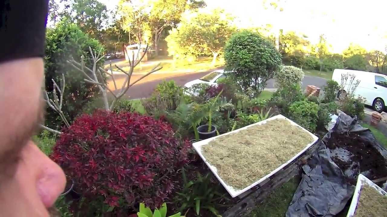 Starting Vegetable Garden