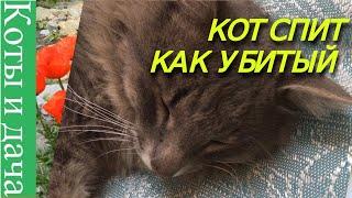 *//*КОТ СПИТ КАК УБИТЫЙ*//* SLEEPING CAT LIKE ADEAD