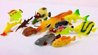 Морские животные, рыбы, акулы видео распаковка