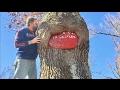 TDW 1714 - The Coca Cola Tree