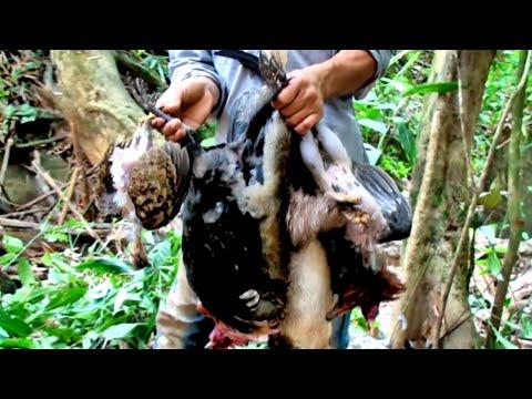 Hunting Southeast Asia Laos / Yos Hav Zoov Tua Qaib Qus, Nploos, Yij,  Nas Lom Zem Kawg 5/24/2020