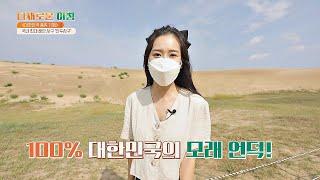 한국에도 사막이 있다?! 국내 최대의 해안 사구 '신두…