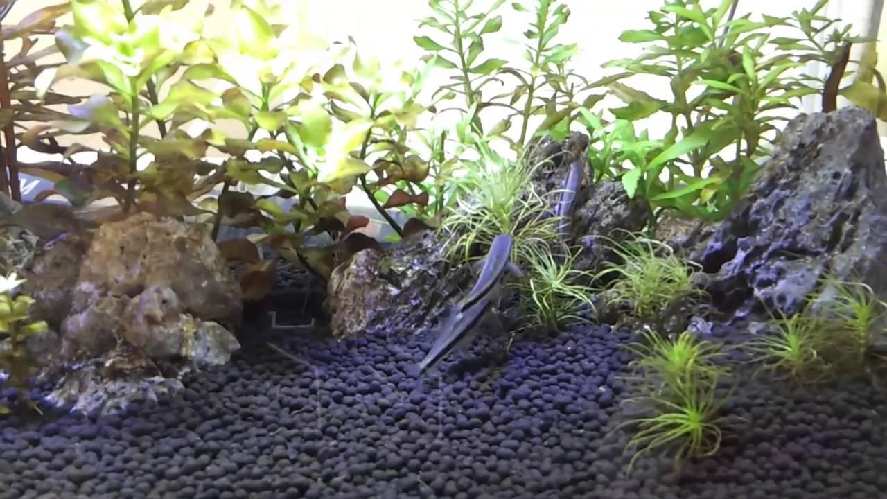 Mini Aquascape Akuarium Kecil Hd Youtube Ziolite Aquarium Dan